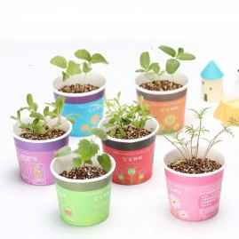1 pc Desktop Mini Pot with Plant