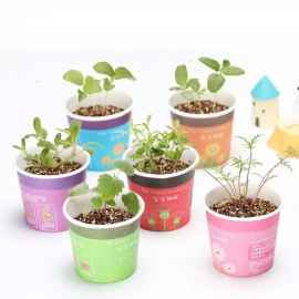 Desktop Mini Pot with Plant - 1 Pc